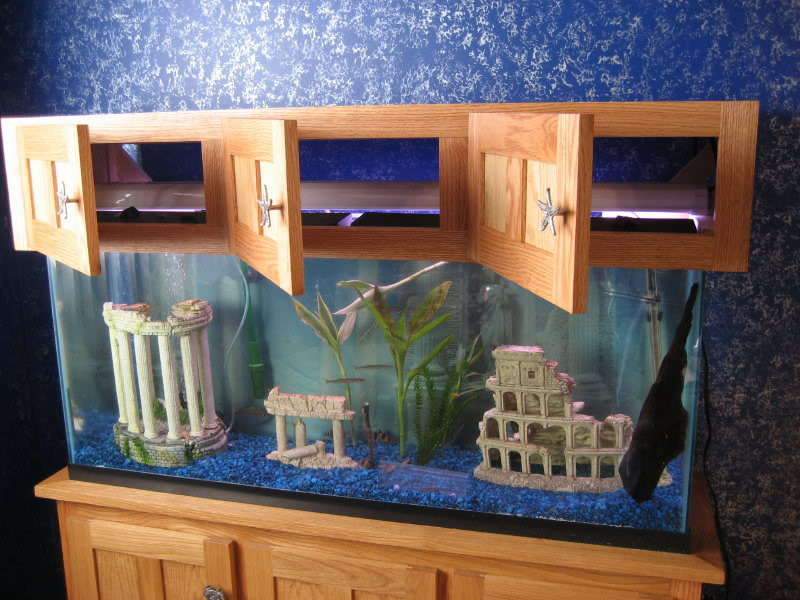 Image of: canopy aquarium design