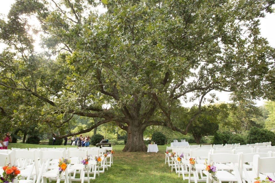 outdoor wedding decorations for trees