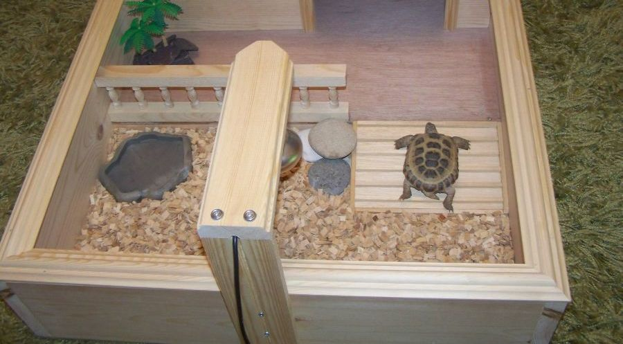 tortoise table's