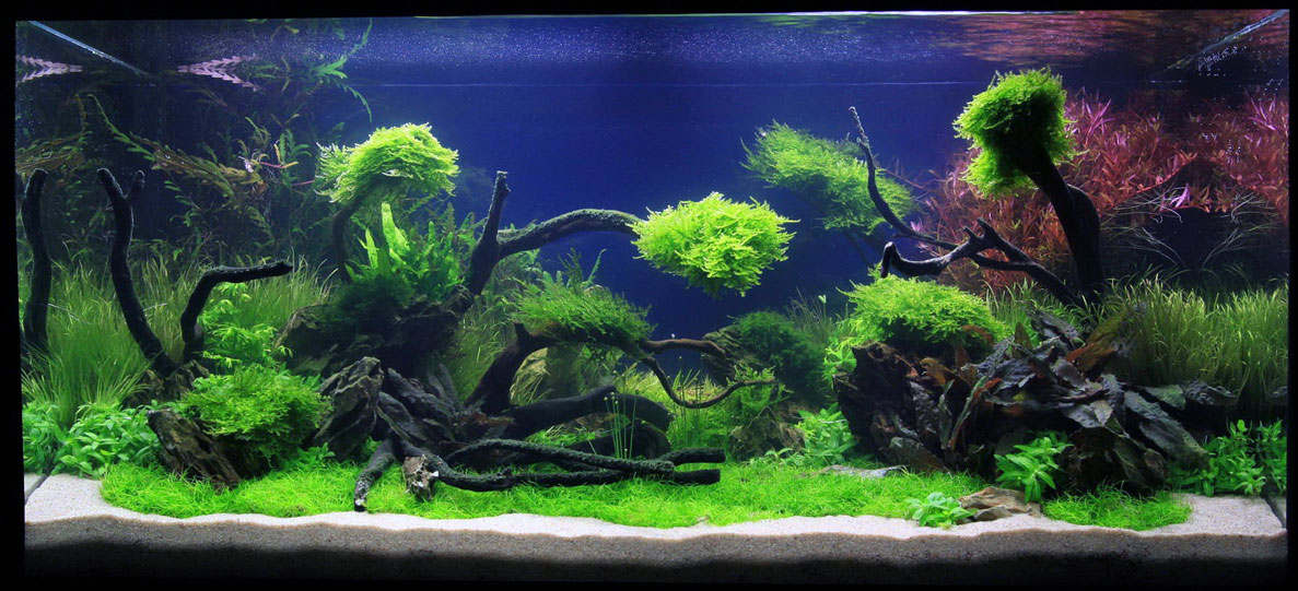 Image of: Aquascapes Design