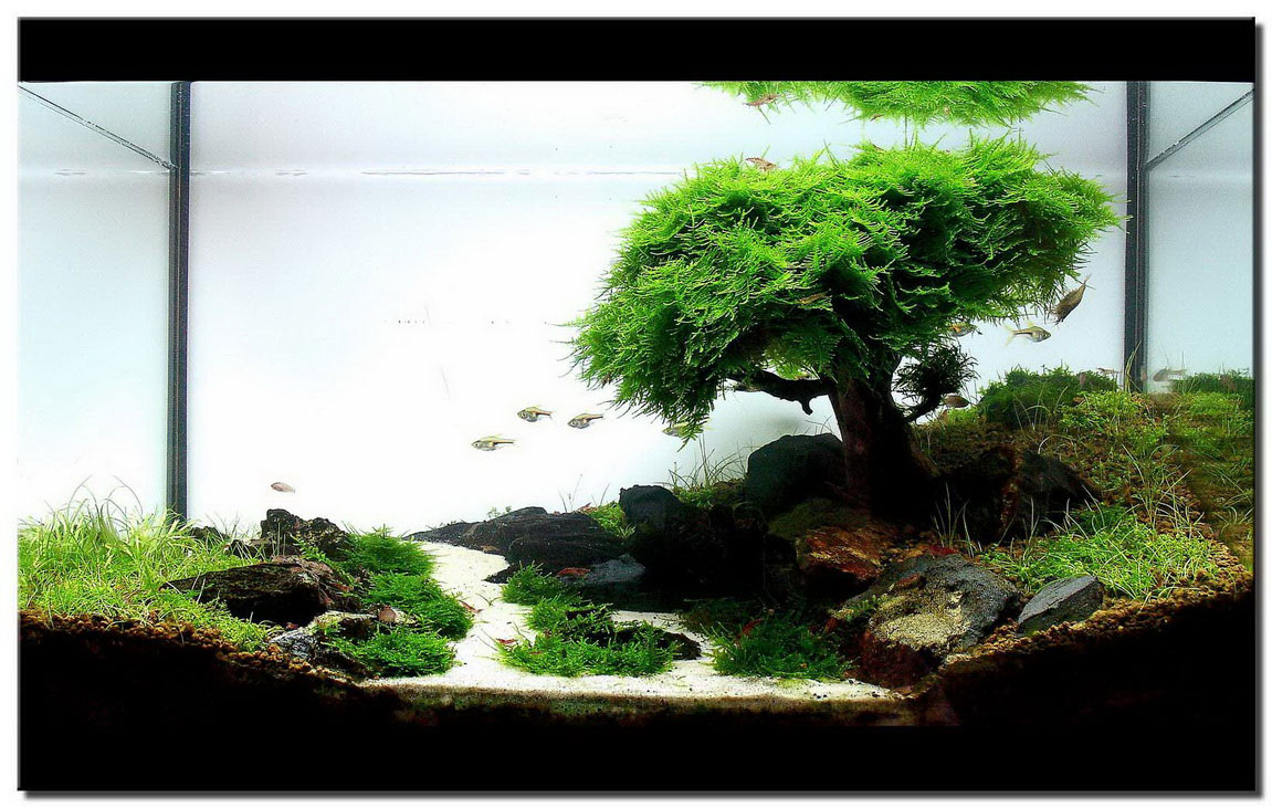 Image of: aquascape designs aquarium
