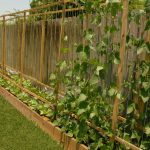 trellis design for beans