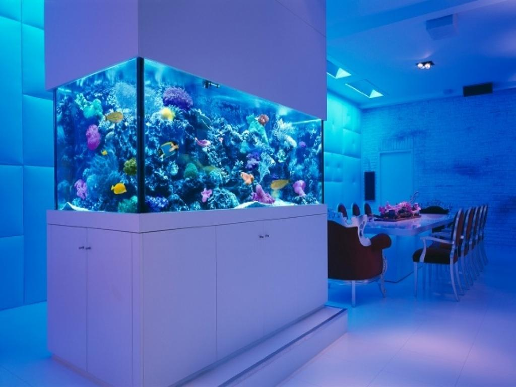 Image of: Aquarium Design Gallery