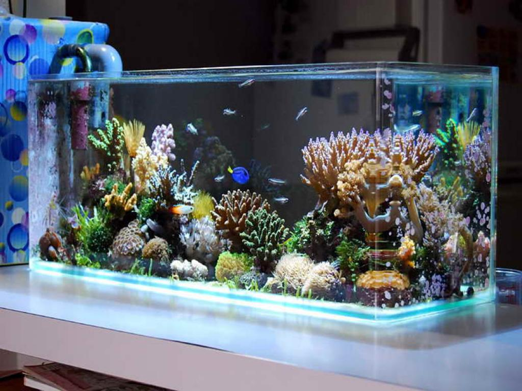 Image of: Best Aquarium Design