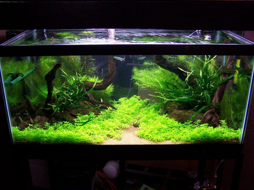 Image of: Simple Aquarium Design