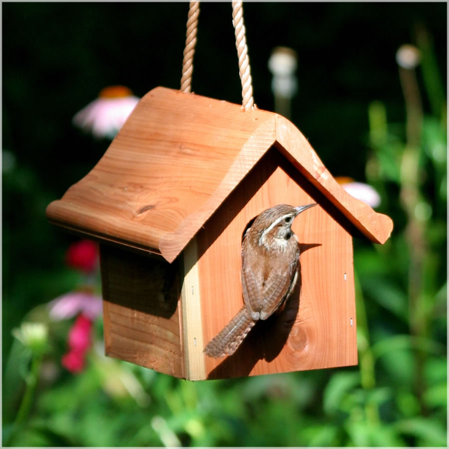 Image of: birdhouse designs for different species