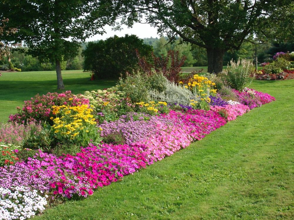 Image of: free perennial garden designs