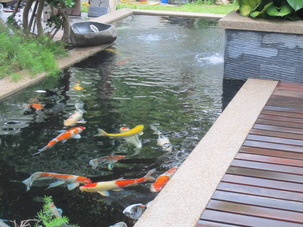 Image of: koi pond designs