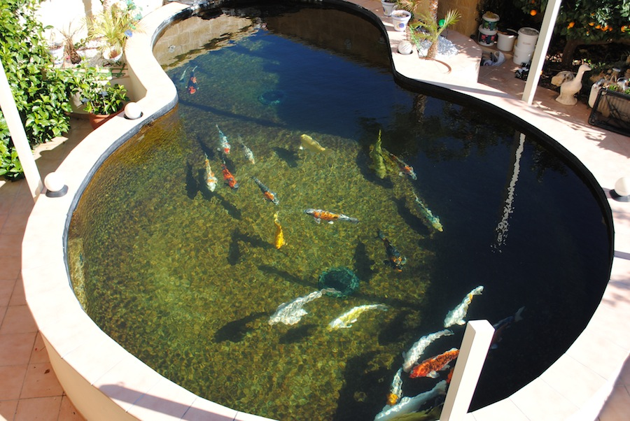 Image of: koi pond filter design