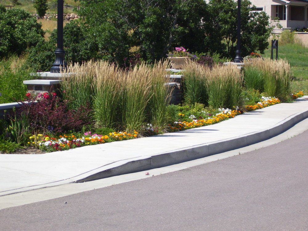Image of: ornamental grasses along driveway