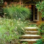 ornamental grasses uk gardens