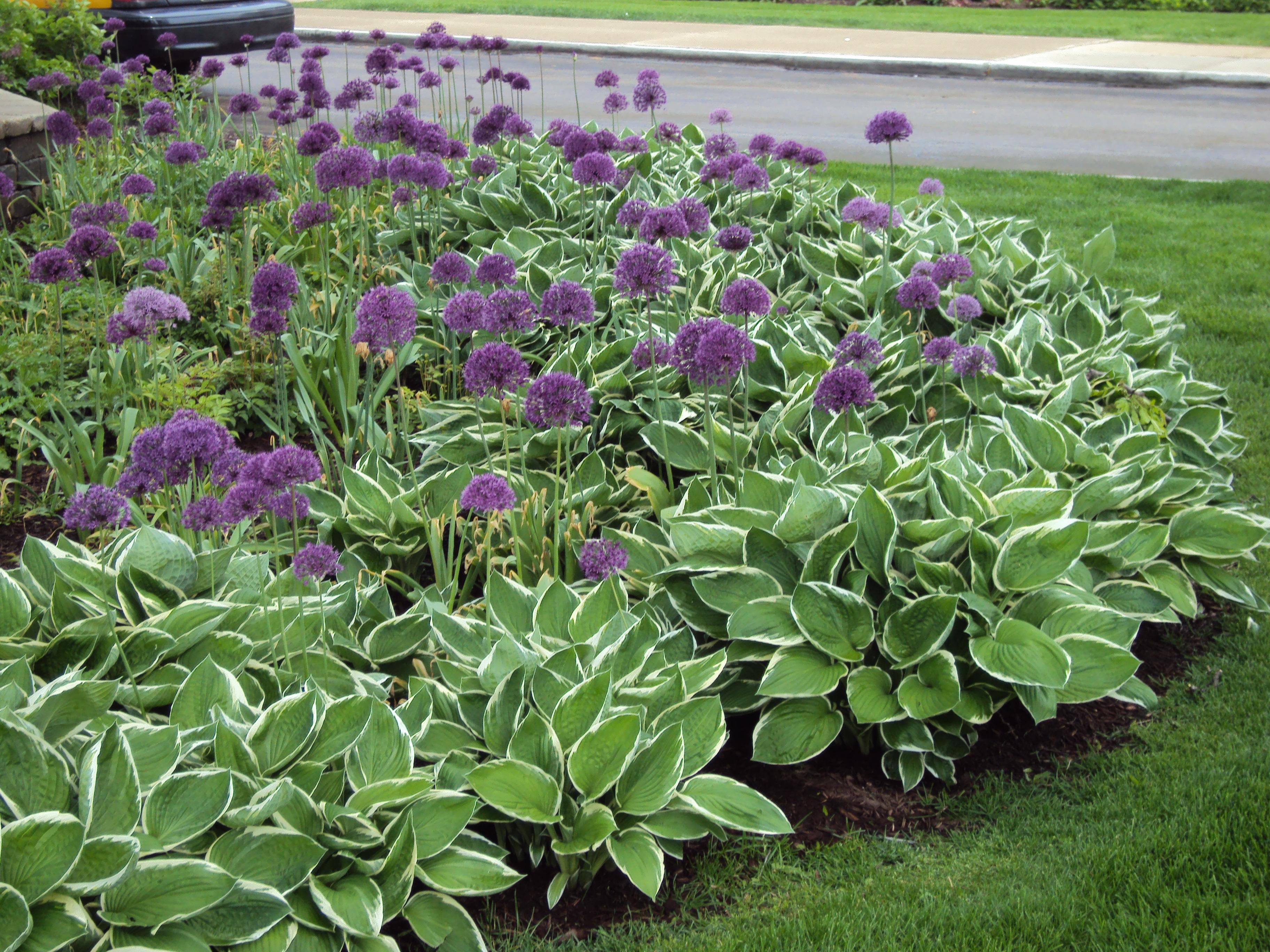 Image of: perennial flower garden design plans