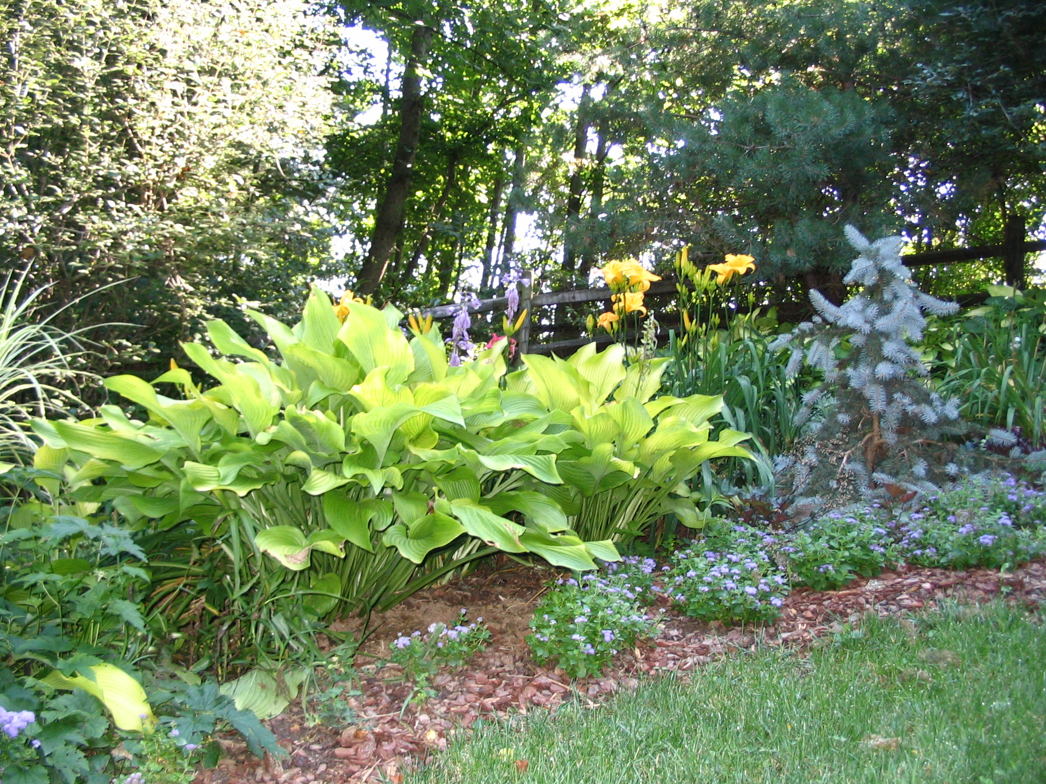Image of: perennial garden designs