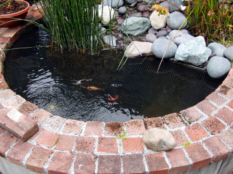 Image of: small koi pond design
